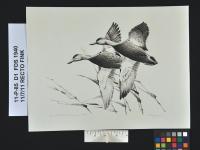 2.DuckAfter